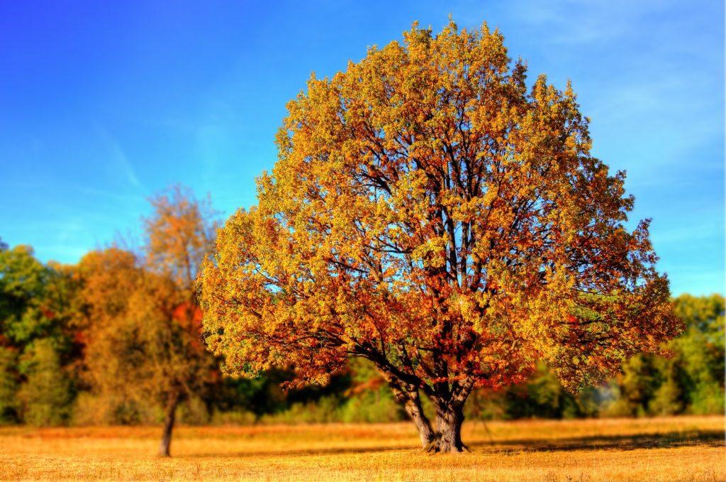 秋冬容易生斑長痘痘